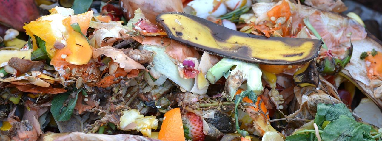 Confira 4 passos para fazer compostagem na sua propriedade