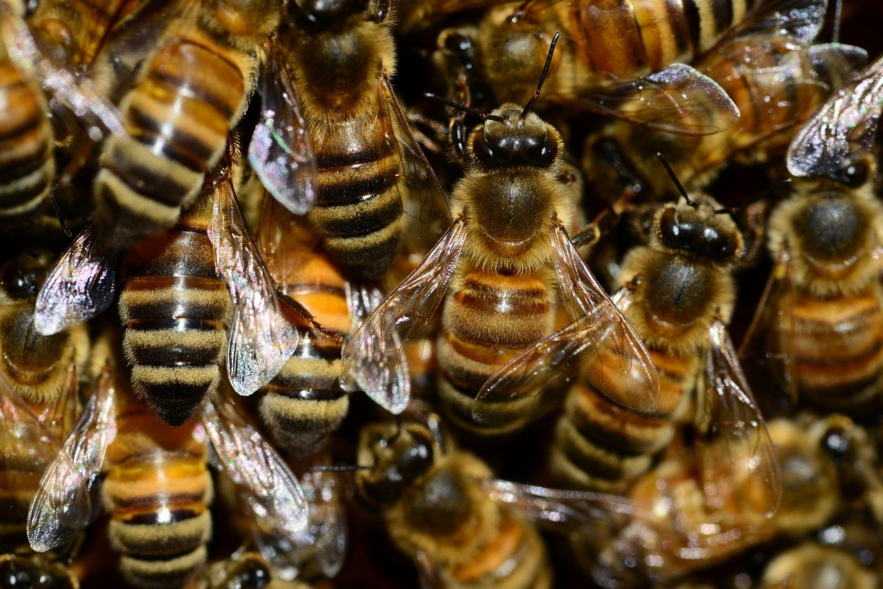 Saiba como reforçar a nutrição das abelhas no período de baixas temperaturas