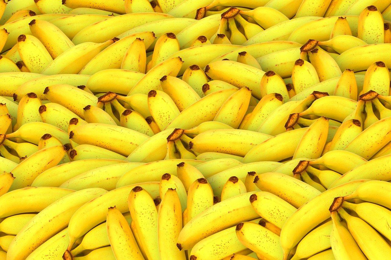 Fusarium: Caravana Família Nação Agro discutirá controle da fusariose na bananeira