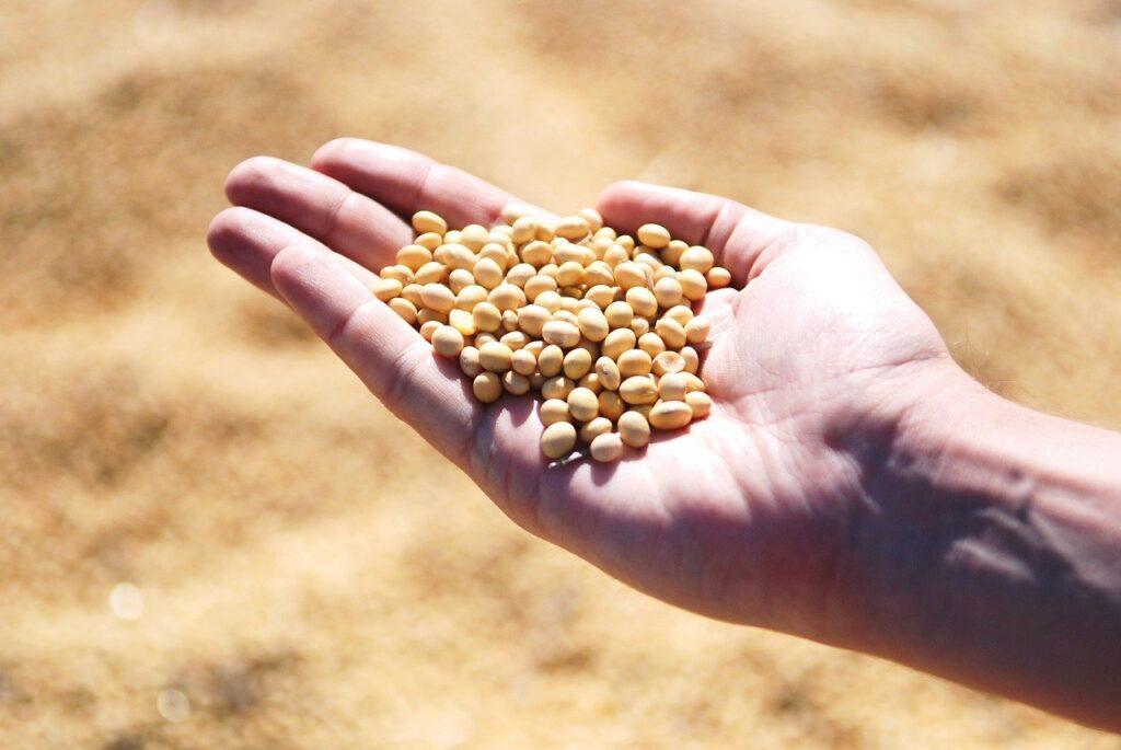 Semana começa com queda no preço da soja