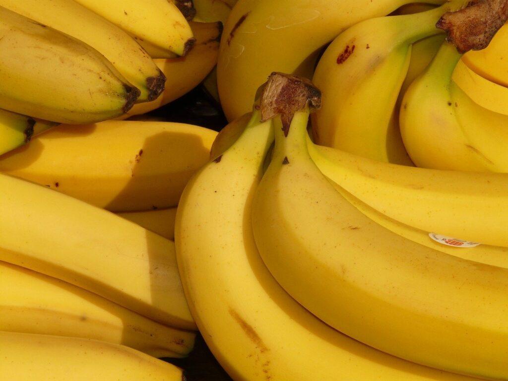 Mal do Panamá deixa produtores de banana em alerta; saiba como prevenir
