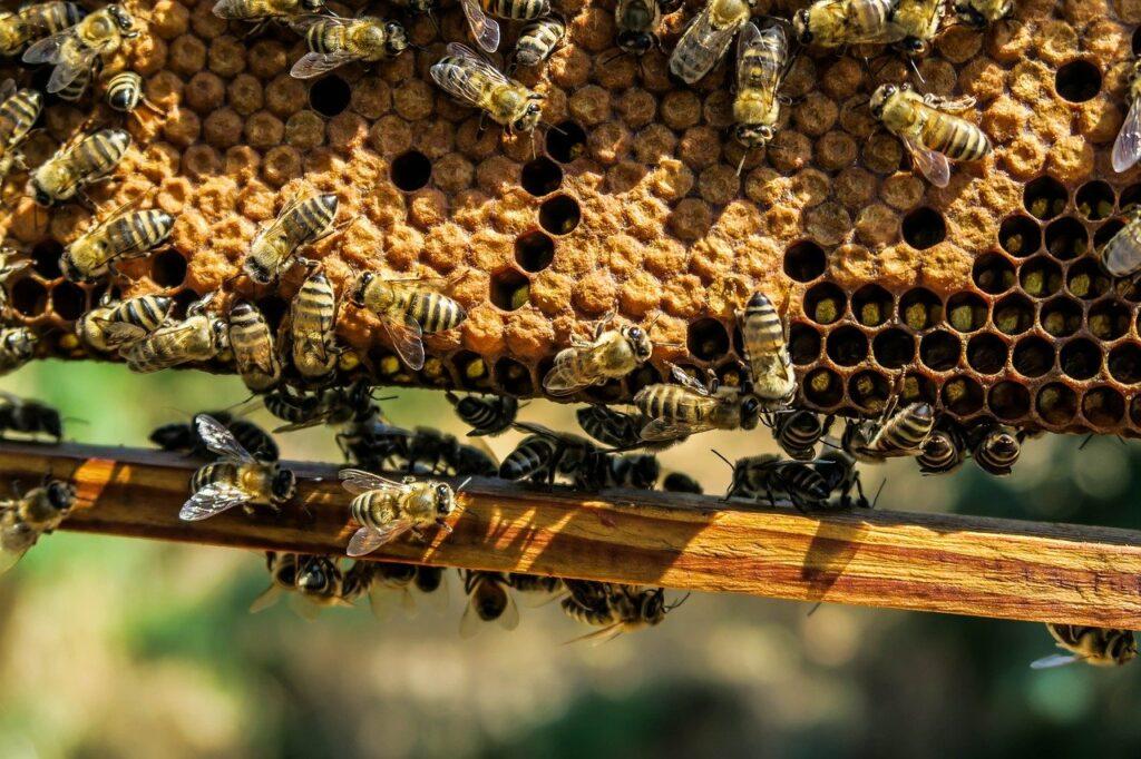 Curso de apicultura eleva renda e conhecimento sobre os benefícios das abelhas