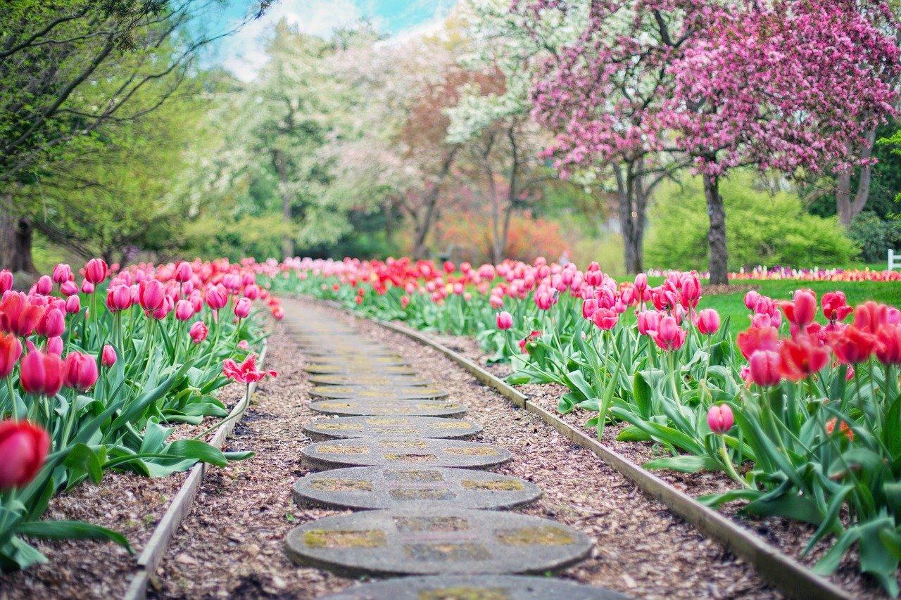 Curso de jardinagem oferece oportunidade de emprego e belas paisagens