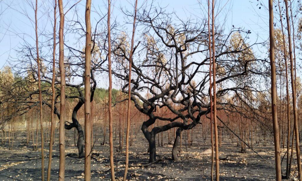 SENAR-SP ensina como combater incêndios no campo em Caravana em Brotas