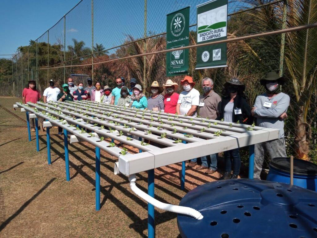 Aquaponia: técnica associa produção de hortaliças com criação de peixes