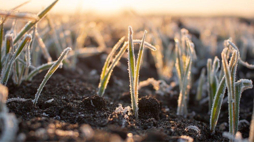 Clima prejudica a produção agrícola e setor busca alternativas para se proteger
