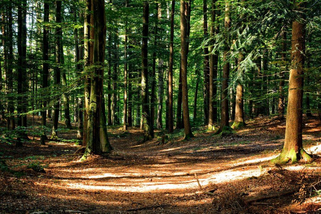 Caravana do SENAR-SP ensinará como obter renda através da recuperação florestal